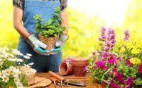 Benefici del giardinaggio