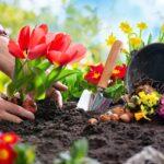 Da appartamento o per giardino: ecco le piante da fiore più belle