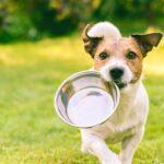 Alimentazione del cane: mini guida per una dieta corretta ed equilibrata del tuo amico a quattro zampe