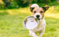 Alimentazione sana ed equilibrata per cani