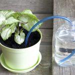 Come innaffiare le piante in vacanza: alcuni semplici trucchi fai da te