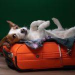 Animali in viaggio: alcuni consigli per viaggiare con il tuo pet