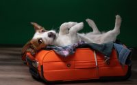 Consigli per viaggiare con gli animali