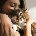 Come capire se il gatto ti vuole bene: 8 segnali d'amore