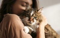 come capire se il gatto ti vuole bene