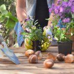 Come rinvasare una pianta: cosa fare e quali strumenti utilizzare